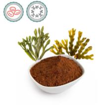 Barna alga - 500g