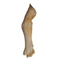 Szárított bárányláb - 1db TEOMANN